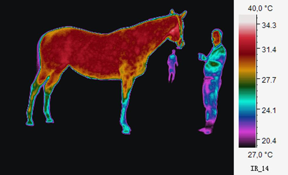 Heatmapped image of a horse and two people
