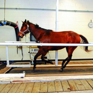 A racehorse using the Altitude Training chamber