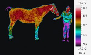 Heatmapped image of a horse and one person