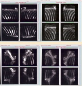 Horse bone density x rays on case studies