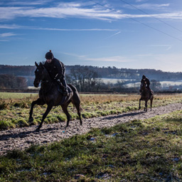 Racehorses using an Equivia all weather gallops