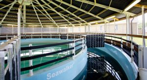 Seawalker, bringing the benefits of the sea to the yard