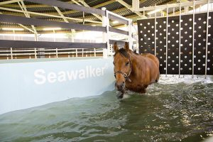 A horse using the Seawalker horse water walker