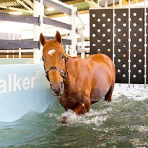 Racehorses using the Seawalker - a very calm environment