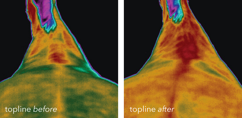 Two photos showing the benefits to the topline that an Vitafloor equine vibration therapy system can make