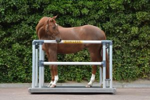 Roan horse stood on a Vitafloor mobile version with side bars and safety click system