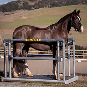 Horse stood on a Vitafloor equine vibrating floor system