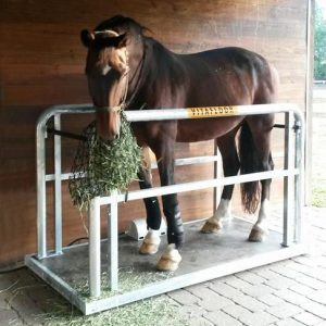 A horse eating hay stood on a Vitafloor equine vibration therapy system