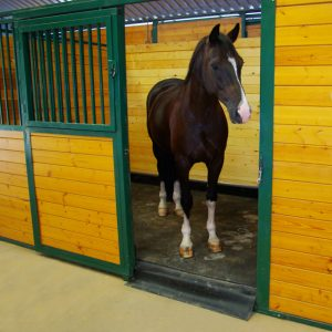 A horse stood inside a stable fitted with a Vitafloor equine vibration therapy system