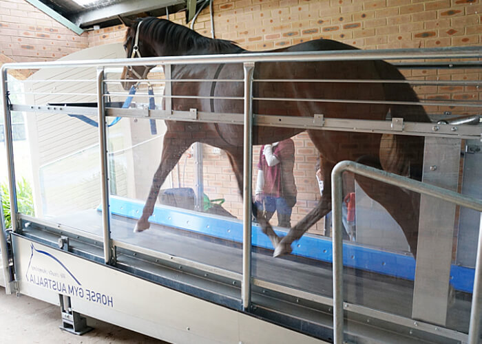A Horse Gym 2000 Equine Treadmill in use offering controlled exercise at all paces.