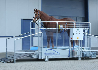 A horse stood in a Horse Gym 2000 Treadmill