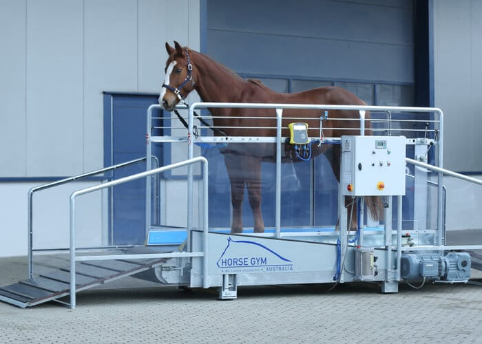 A horse standing in a Horse Gym 2000 equine treadmill