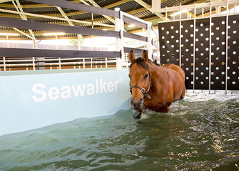 A horse walking round a Seawalker Horse Water Walker