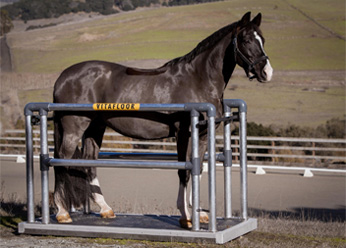 A horse stood on a mobile Vitafloor version with side bars and safety click system