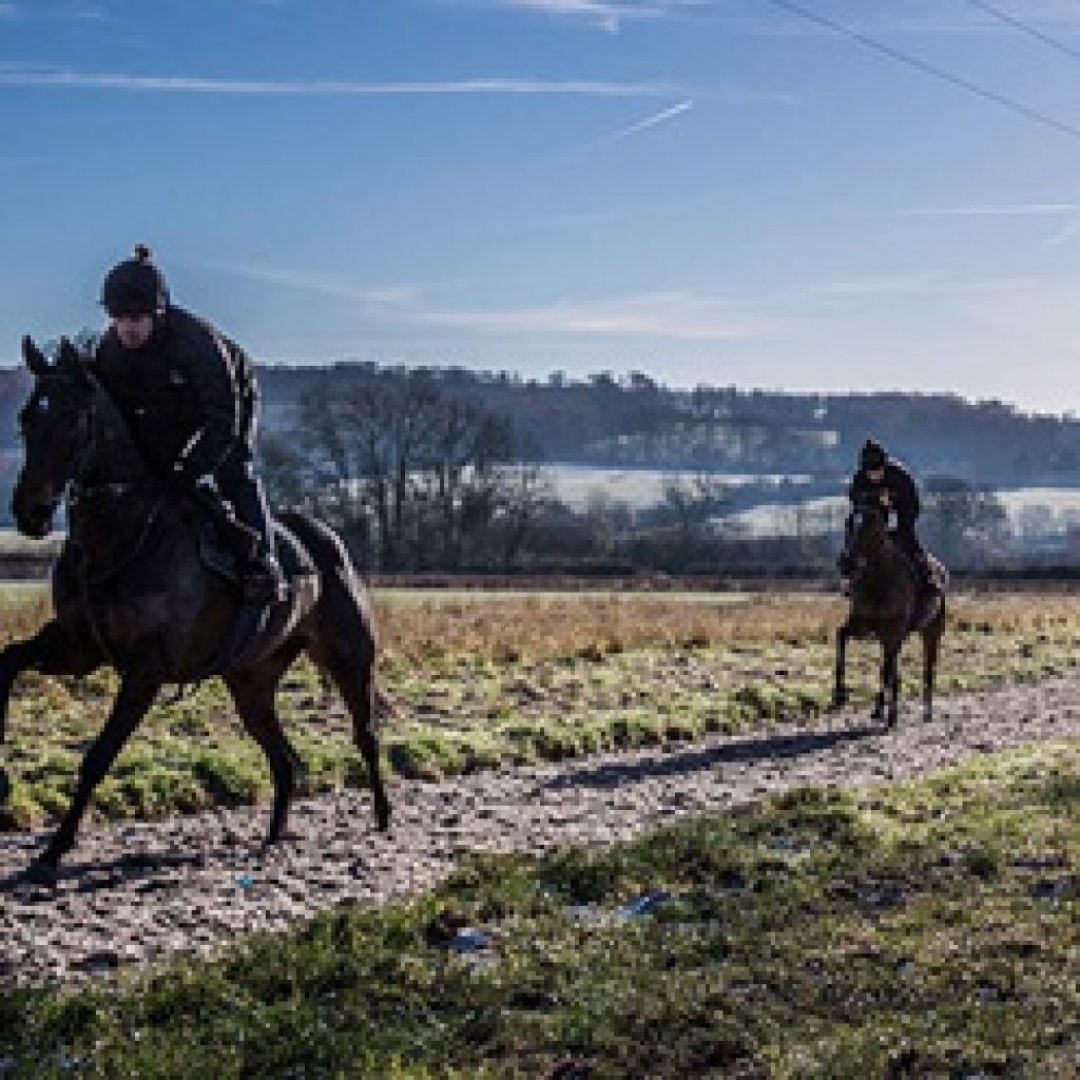 two race horses on an all-weather gallop in winter