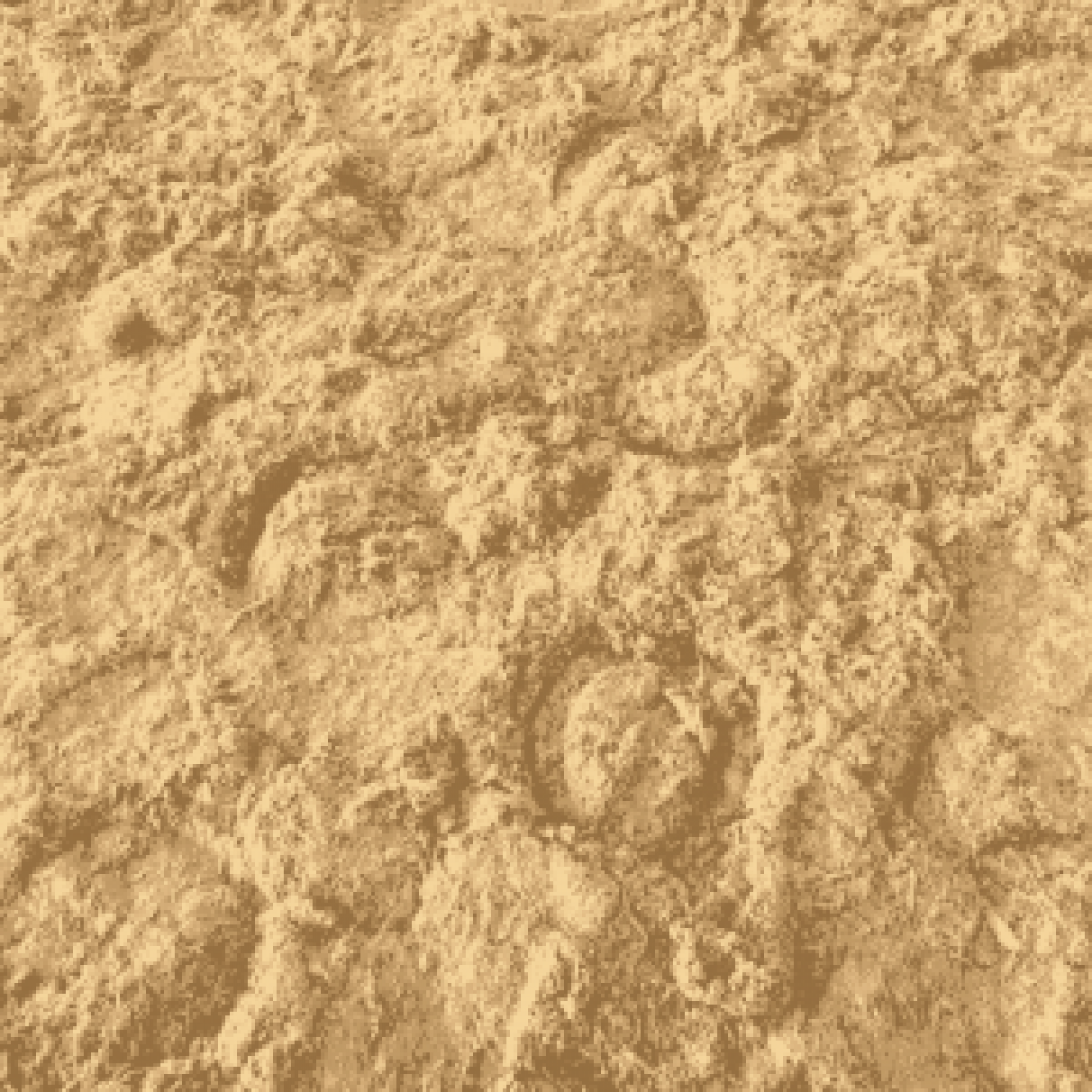 hoof prints in sand surface